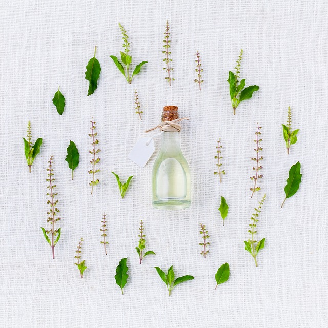 Different types of Holy Basil leaves with holy basil oil