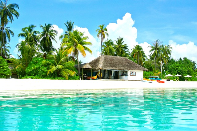 image coconut tree resort and blue water scene