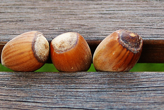 a number of hazelnuts