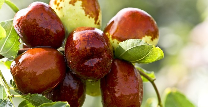 how many dates to eat per day