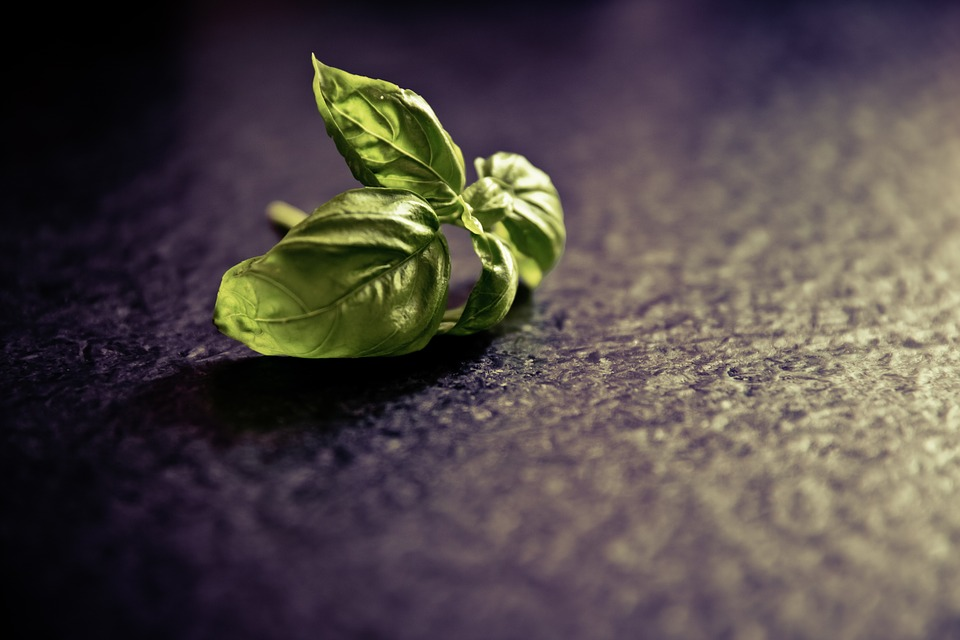 image-basil-leaves