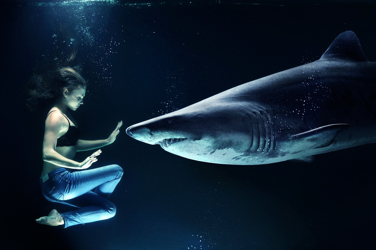 Woman Hai Great White Shark Underwater Sea
